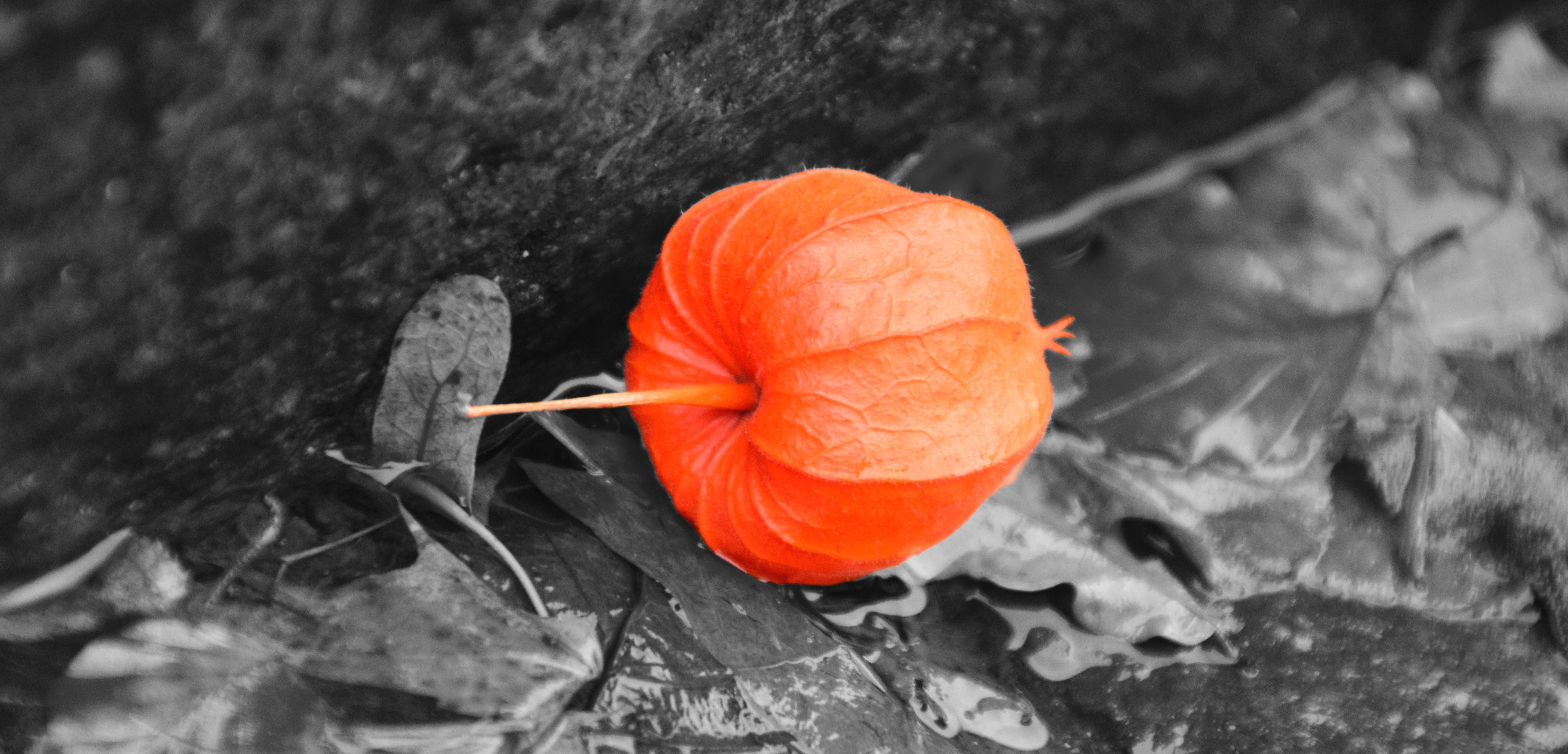Kostenlose Bild: orange Farbe, Blatt, Herbst, künstlerisch, Fotomontage