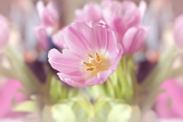 nature, petals, plant, bloom, pollen, pistil, vegetation, pink
