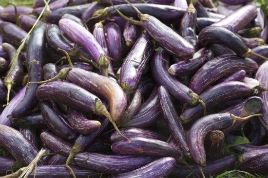 aubergine, agriculture, organic vegetable, purple, vegetable