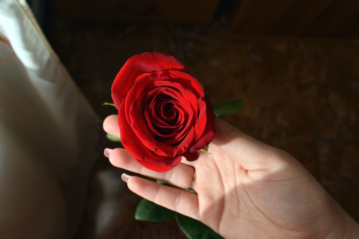 red rose, human hand, romantic, bloom, blooming, beautiful