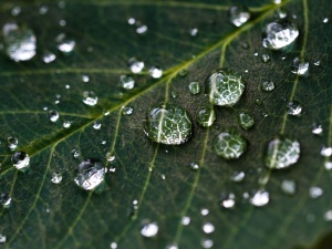 leaf, plant, raindrops, water, dew, green