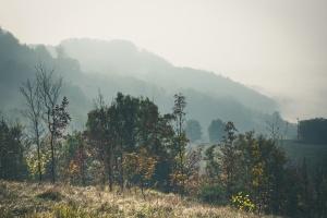 mist, mountain, fog, grass, hill, trees, nature, landscape