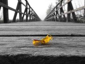 wood, planks, bridge, leaf