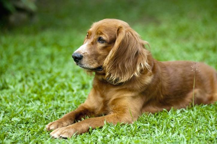 chien mignon, canin, herbe verte, les jeunes