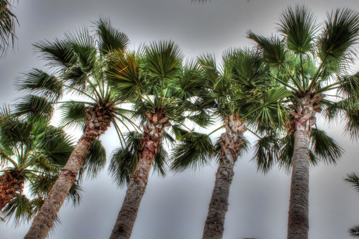 sea, ocean, water, palms, palm trees, sky, clouds, summer, exotic