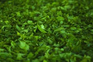 zelená tráva, tráva, příroda, zelený čaj, rostliny, zahrada, letní