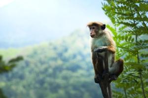 animal, exotique, forêt tropicale, singe, faune, arbre, tropical
