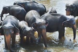 слонове, група, стадо, Африка, кал, езеро
