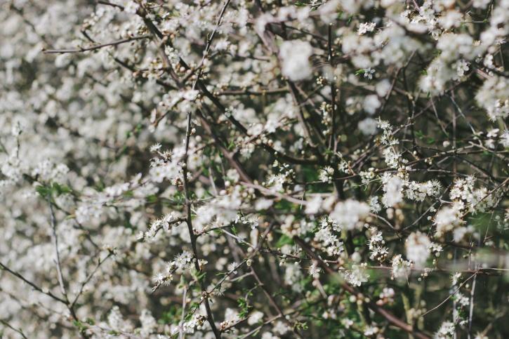 flora, germogli, fiori, alberi, cespugli