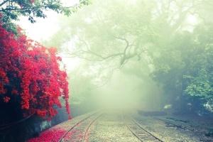 road, summer season, trees, woods, flowers, fog