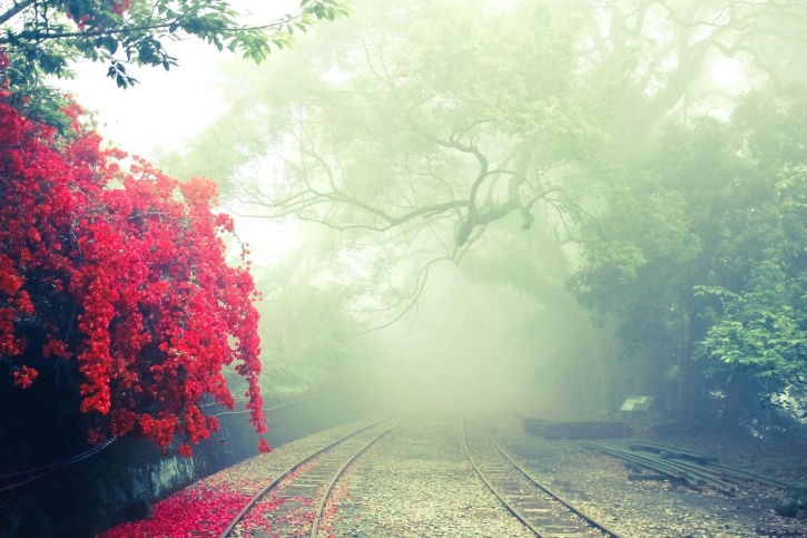 road, summer season, trees, woods, flowers, fog