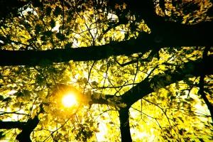 l'été, la forêt, les arbres, les feuilles, les rayons du soleil, le soleil