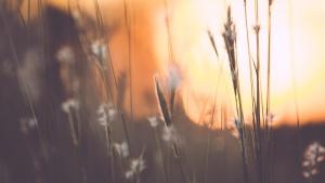 summer, Sun, sunrise, autumn, flowers, forest, grass, landscape, daylight