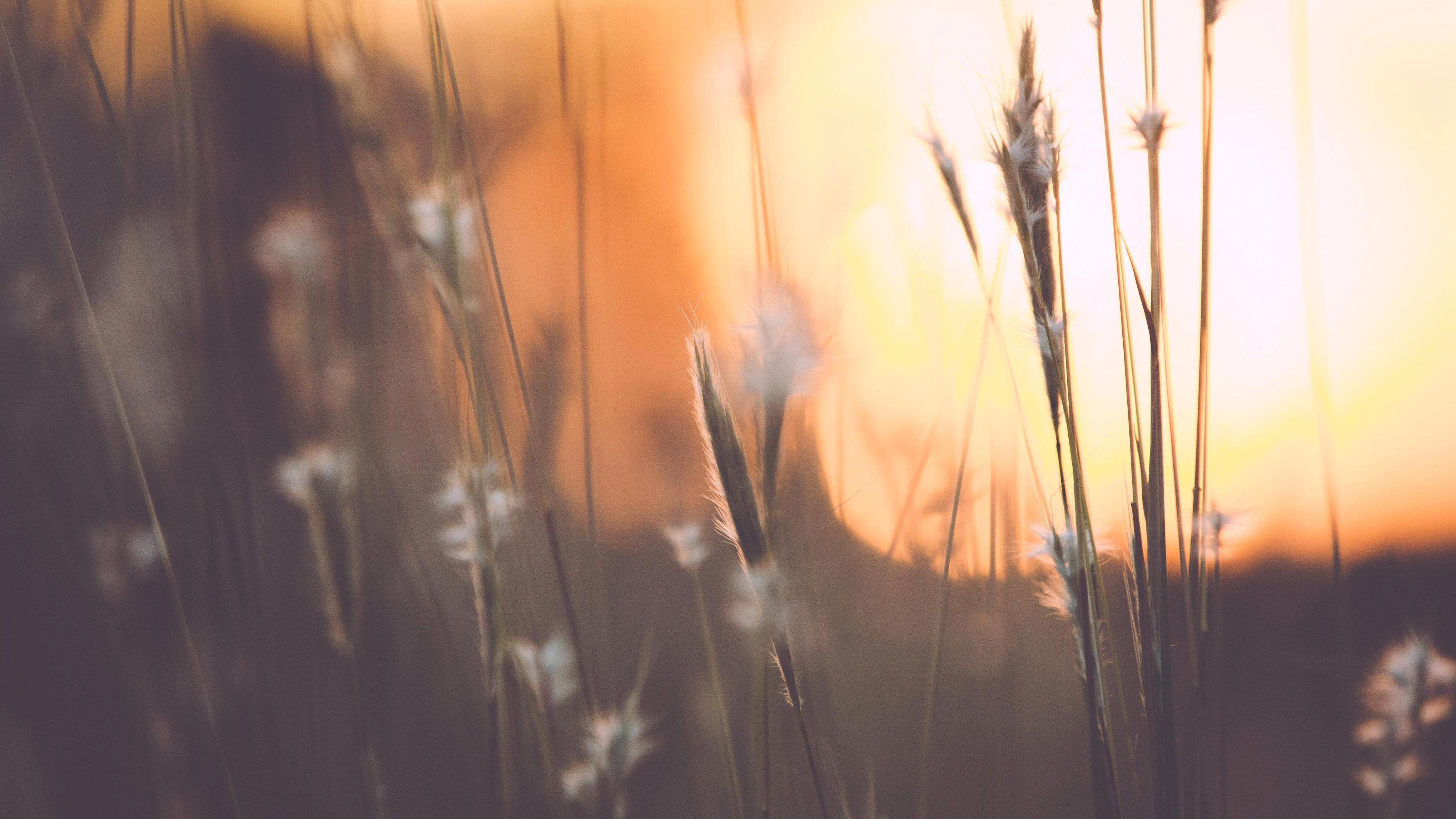 foto de Image libre: été, soleil, lever de soleil, automne, fleurs, forêt ...