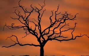 drvo, sama, sumraka, jesen, grane, silueta