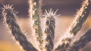 pouštní rostliny, divoký západ, Texas, kaktusy, příroda, trny