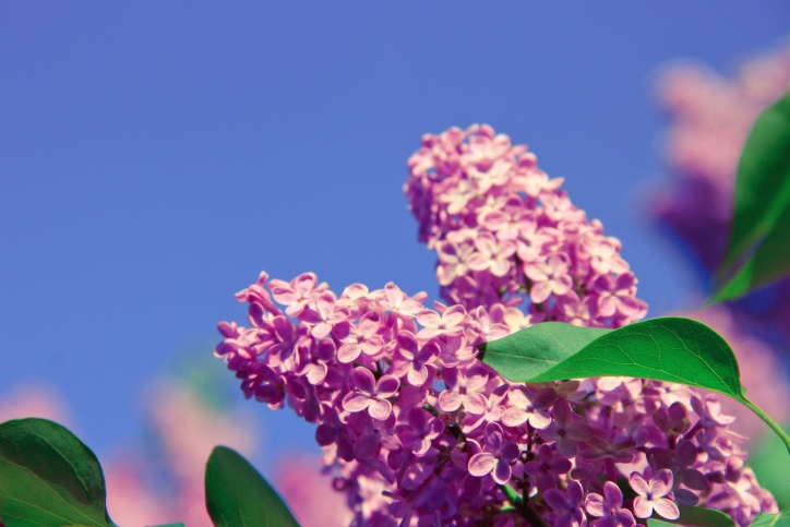 flora, flowers, leaves, plant, bloom