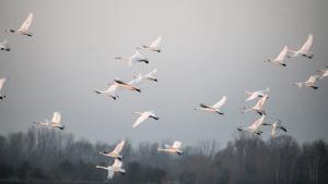 птици, летящи, мъгла, свобода, животните