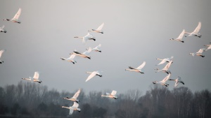 birds, flying, fog, freedom, animal