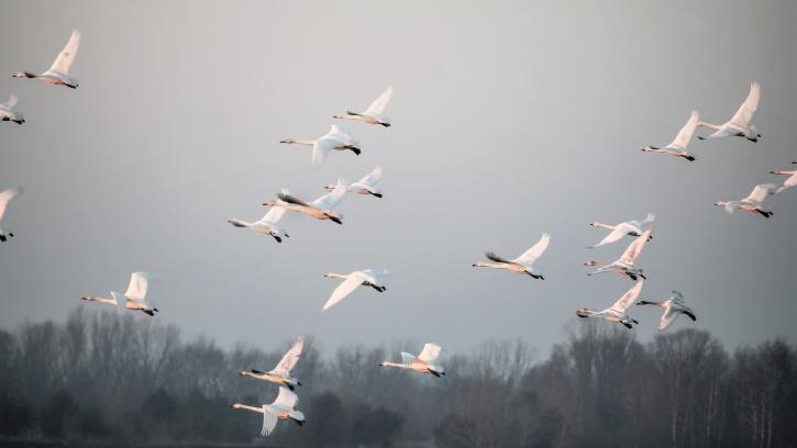ptáci, létání, mlha, svoboda, zvíře
