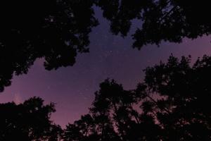 cielo, estrellas, árboles, oscuro, noche, al aire libre, silueta