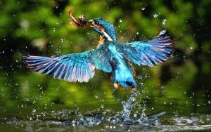 екзотични, красива, птица, крила, цветни, пера