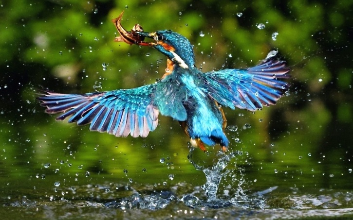 exotic, beautiful, bird, wings, colourful, feathers