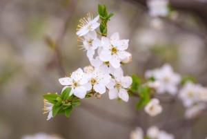 flora, beautiful, flowers, blossom, petals, spring time, tree
