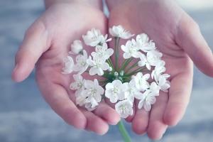 pétale, fleur, flore, main, fleurs