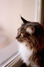 domestic cat, cat, glass, window, kitten