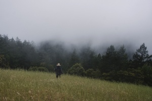 person, field, fog, forest, grass