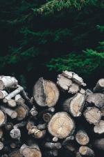 firewood, trees, wood logs