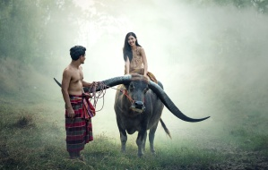 longhorn cattle, Asia, woman, man, romantic, cattle