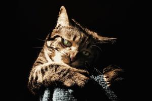 animal, domestic cat, cute, feline, kitty, pet