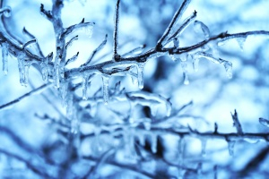 snow, ice crystal, tree, branches, cold, forest, frost, winter