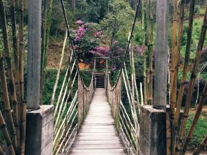 puente de madera, puente colgante, verano, viaje, árboles, cerca, sendero