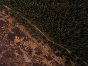 дървета, гори, гори, пейзаж, на открито
