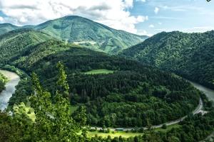 숲, 나무, 계곡, 물, 강, 산