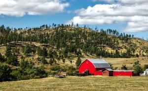 иглолистни дървета, земеделска земя, природен парк, ранчо, селски, земеделието, плевня