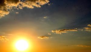실루엣, 하늘, 여름, 태양, 일출, 하늘, 빛