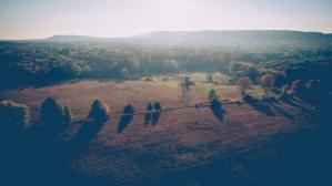 rolnictwo, drzew, zielona, Góra, upraw, pola