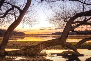 swamp, sunset, trees, tree trunk, water, oak tree, river