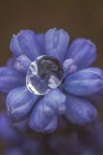 water, flora, flower, petals, wet, bloom, blossom, dew