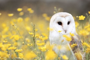 flowers, grass, vertebrate, owl, animal, bird, field