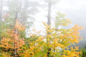 fog, forest, trees, mist, nature, autumn