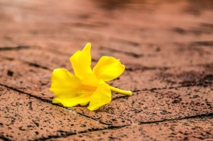 flower, texture, tiles, still life, yellow