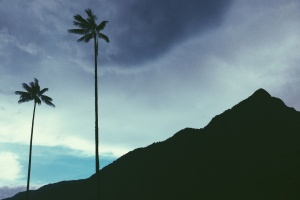 coconut, palm trees, dusk, clouds, mountain, nature, silhouette
