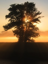 sunrise, sunset, tree, nature, silhouette, sky, Sun