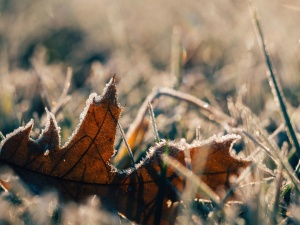 frost, grass, ice, leaf, snow, winter