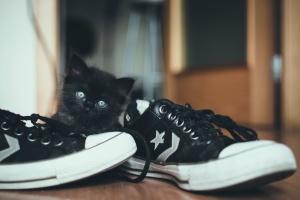domestic cat, pet, shoes, sneakers, animal, cat, cute
